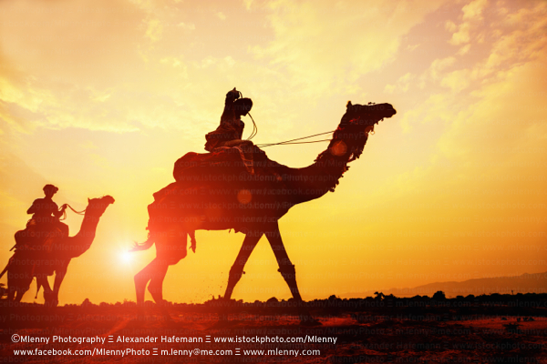 Desert Camel Caravan at Sunset