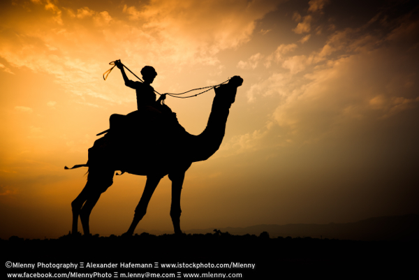 Sunset Camel Rider