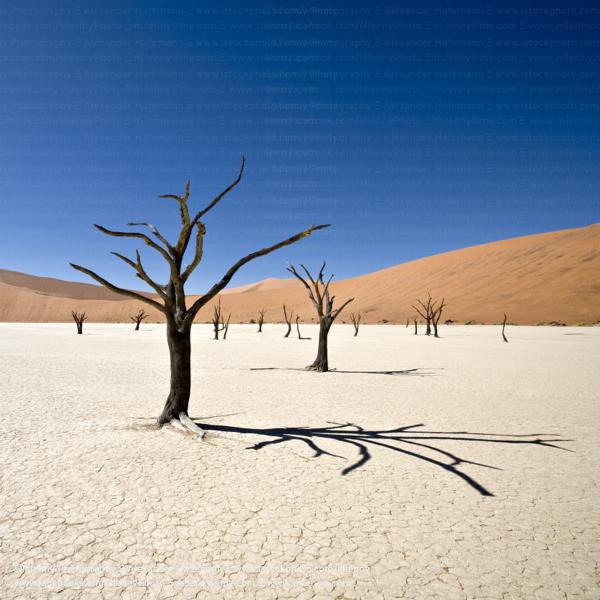 Desert Trees Dead Vlei, Namib Desert, Namibia