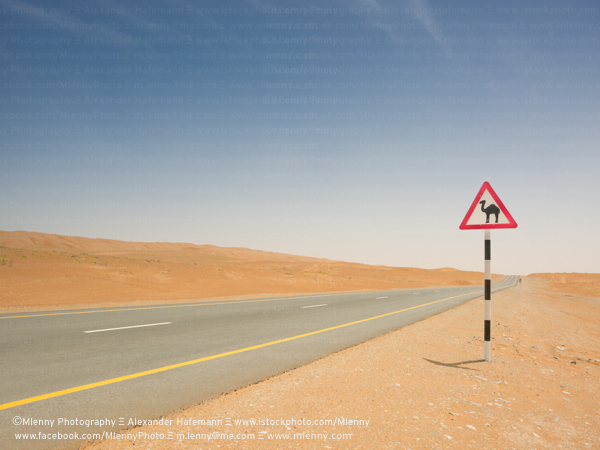 Camel Crossing, Desert Highway, Oman