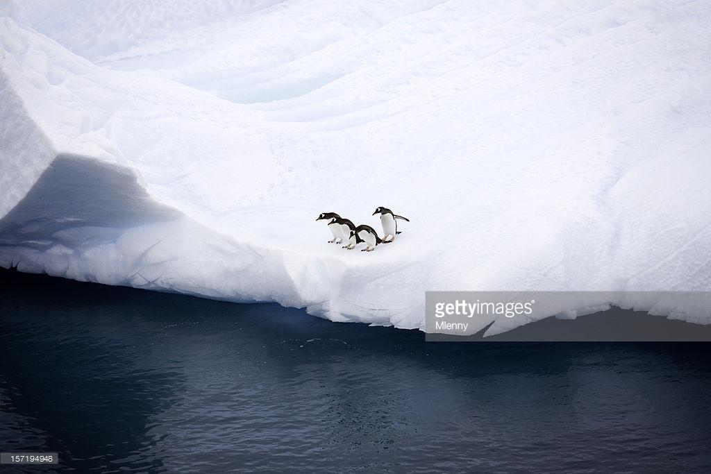 Curious Penguins Iceberg Antarctica