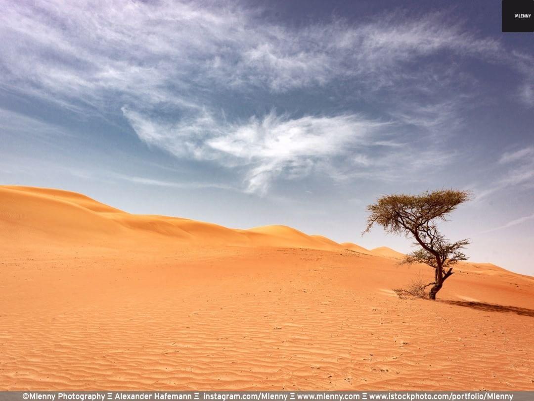 Lonely Desert Tree