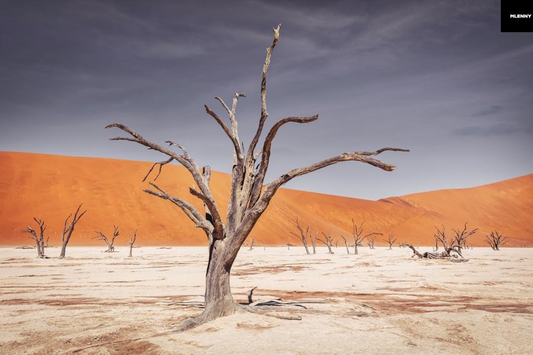 Namib Desert Trees Dead Vlei Sossusvlei Namibia